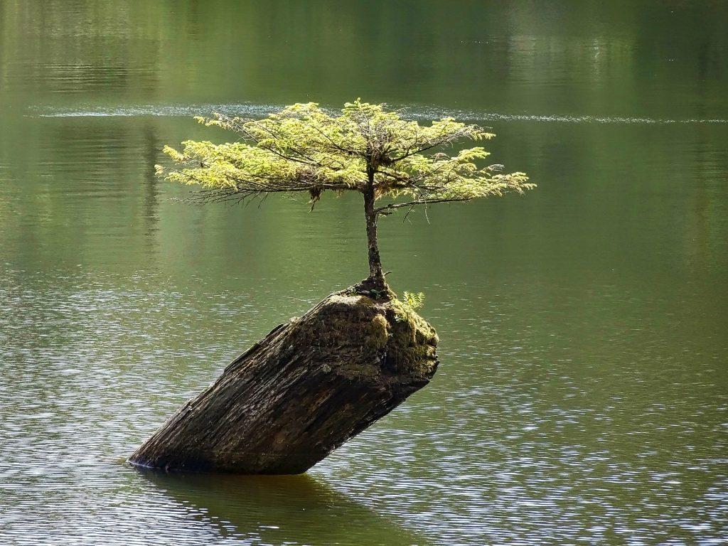 tree-1648523_1920